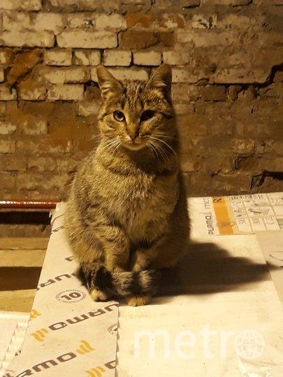 """Котик. Фото """"Metro"""""""