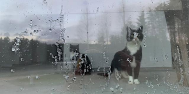 Отдыхала в Давинчи Парк, Сосново. Увидела котиков за стеклом, показалось забавным.