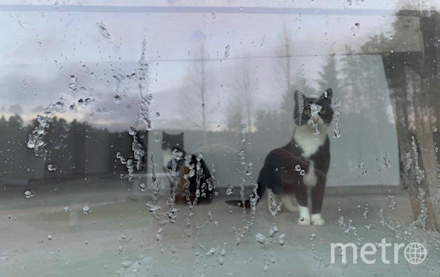 """Отдыхала в Давинчи Парк, Сосново. Увидела котиков за стеклом, показалось забавным. Фото Оксана Столярова, """"Metro"""""""