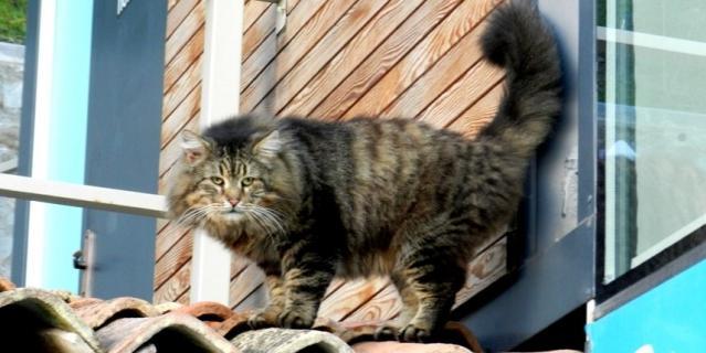 Фотография кота, который мне встретился в январе 2021 в Ялте, Крым.