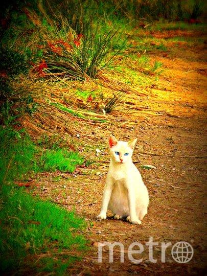 """Рыжую кошку я сфотографировала в Ленобласти. Фото Елена Качаровская, """"Metro"""""""