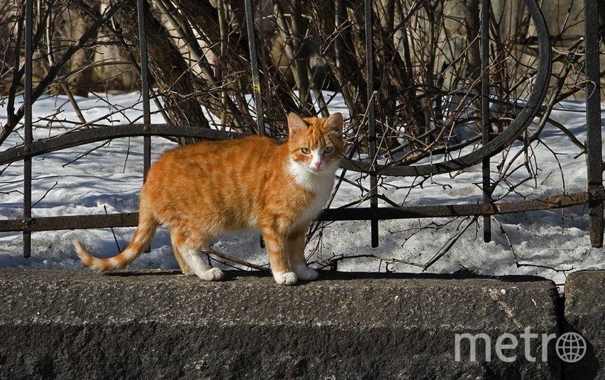 """Выборгский кот. Фото Алексей Терентьев, """"Metro"""""""