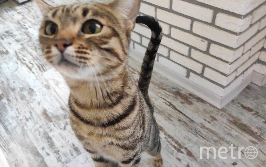 """Кошка Молли. Фото """"Metro"""""""