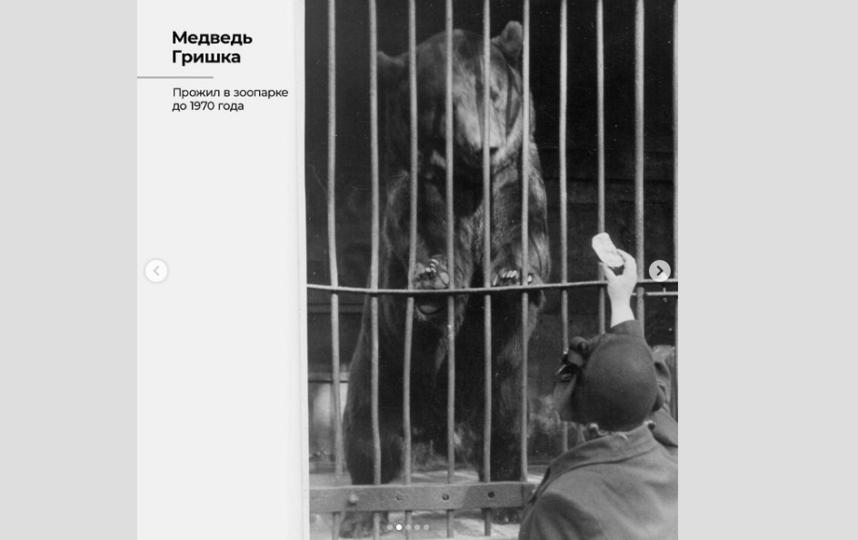 Медведь Гришка. Фото Скриншот Instagram: @spbzoopark
