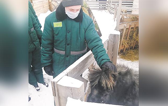Ребята с удовольствием пообщались с животными. Фото 54.FSIN.GOV.RU