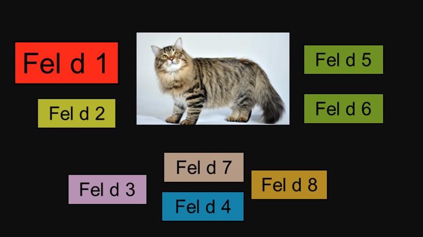 Кошка и те самые 8 аллергенов, содержащиеся в её организме. Фото инфографика Сергея Лебедева