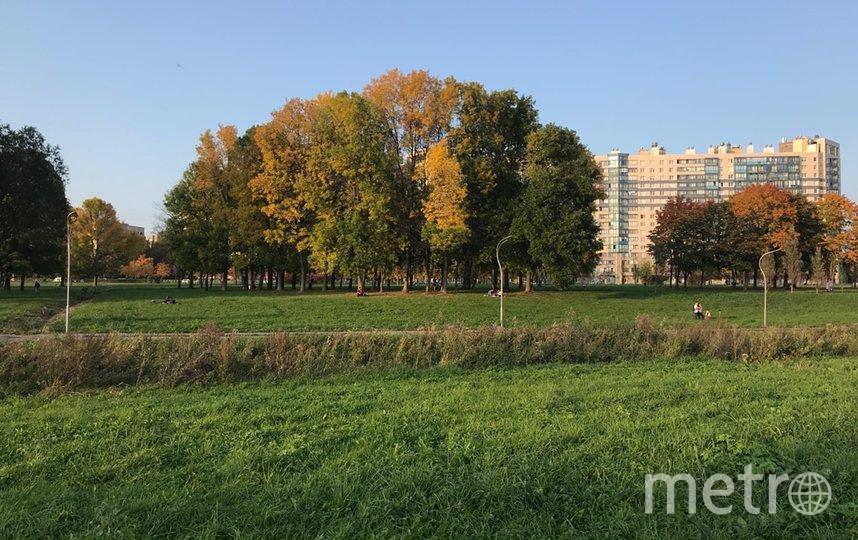 "Муринский парк. Фото https://vk.com/kalininskiyzapark, ""Metro"""