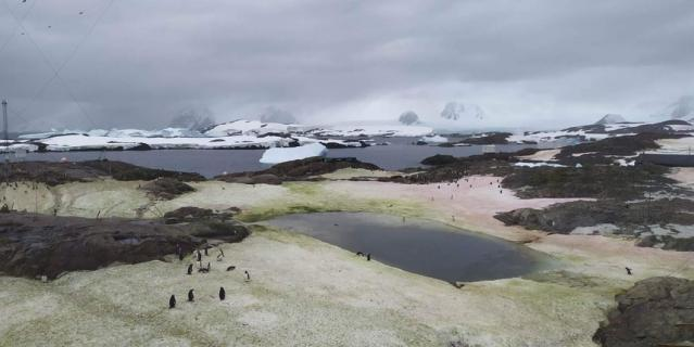 "В Антарктиде ""зацвел"" снег."