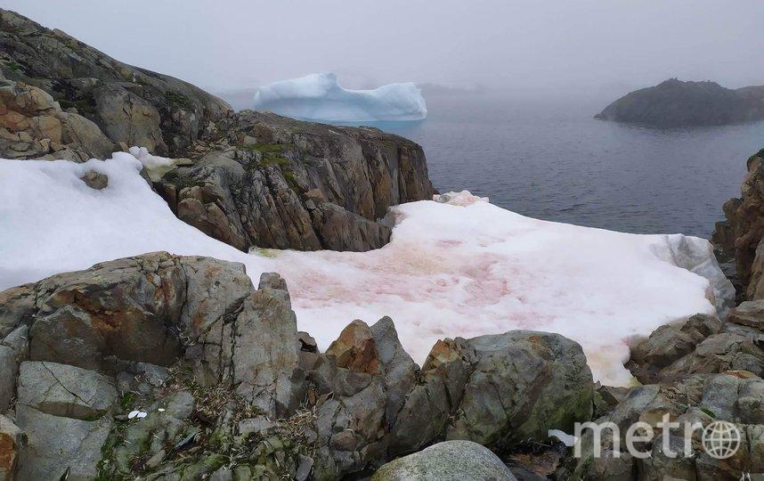 """В Антарктиде """"зацвел"""" снег. Фото https://www.facebook.com/AntarcticCenter/"""