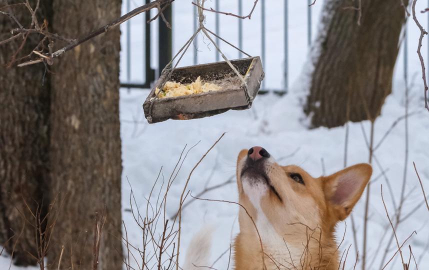 """Олонецкие собаки иногда воруют еду из птичьих кормушек. Фото Алена Бобрович, """"Metro"""""""