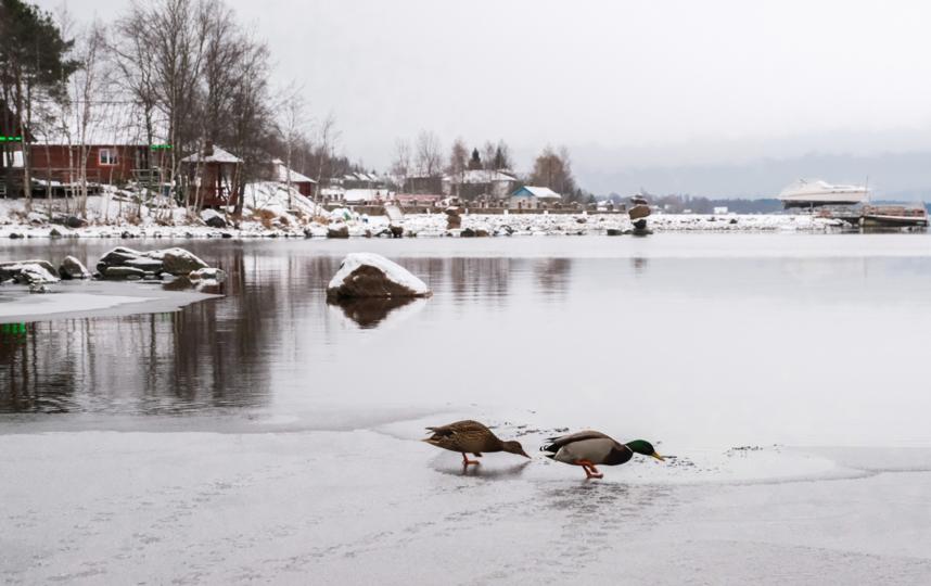 """Ладожское озеро прекрасно в любое время года. Фото Алена Бобрович, """"Metro"""""""