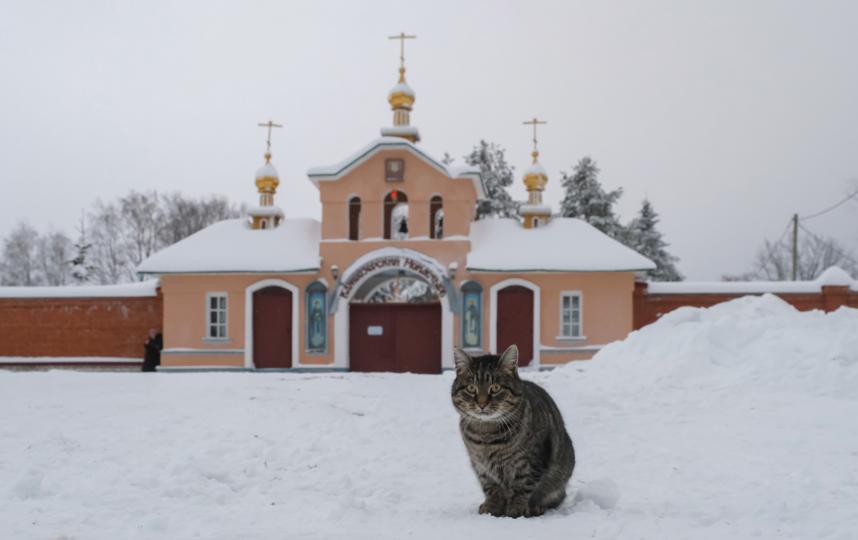 """У стен Важеозерского монастыря туристов встречают коты. Фото Алена Бобрович, """"Metro"""""""