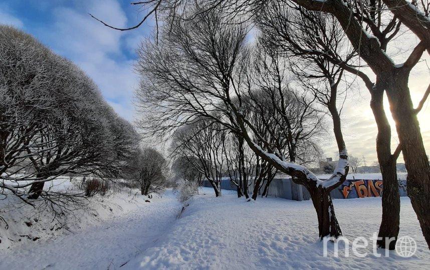 "Участок огорожен забором. Фото ""За сохранение Муринского парка"", Предоставлено организаторами"