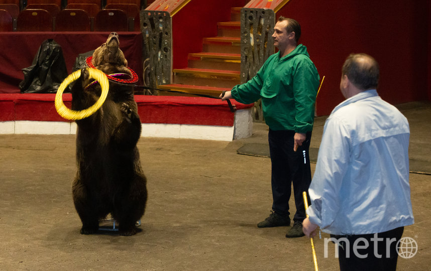На репетиции Саше больше всего понравились медведи. Фото Василий Кузьмичёнок