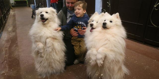 Саша и его папа Кирилл знакомятся с собаками породы самоед.