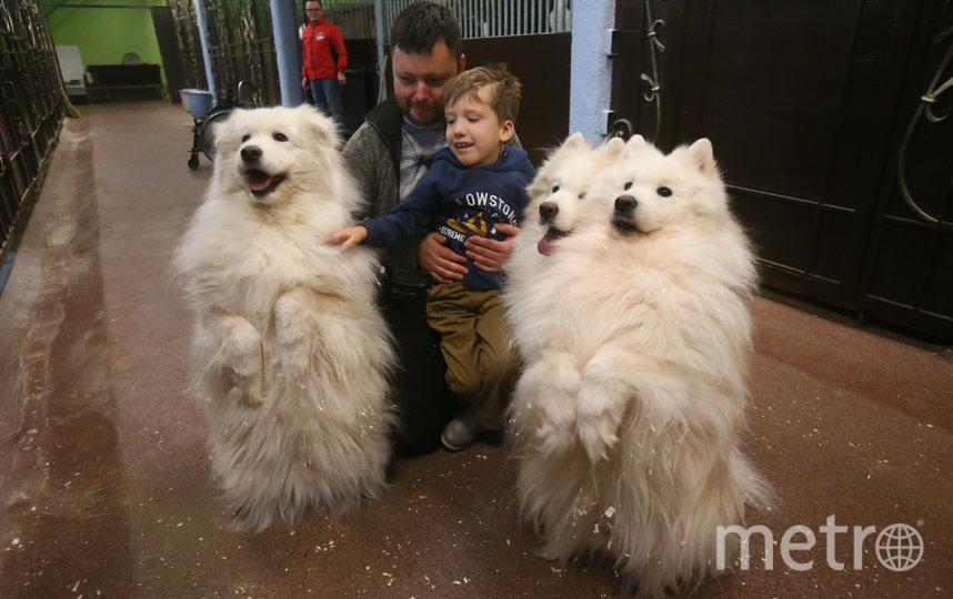 Саша и его папа Кирилл знакомятся с собаками породы самоед. Фото Василий Кузьмичёнок