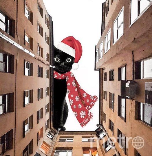 Снимки с котами появляются каждую пятницу. Фото instagram.com/katrishka_petrova.