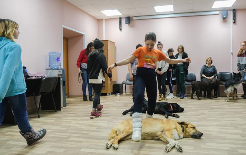 """Канистерапия – это метод реабилитации, который подходит людям с ограниченными возможностями, депрессией и всем, кто нуждается в душевной ласке. На занятиях у четвероногих терапевтов всегда аншлаг. Фото Алена Бобрович, """"Metro"""""""