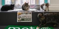 В Петербурге выберут самого культурного кота