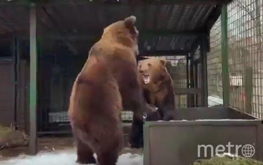 Первыми проснулись медведи Хвостик и Носик. Фото vk.com/veles_spb.