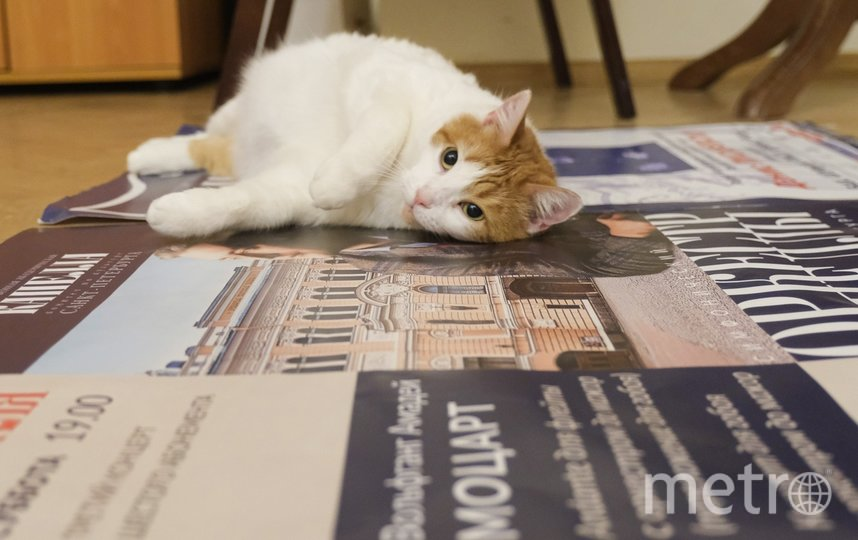 "Анжелина из Капеллы. Фото Алена Бобрович, ""Metro"""