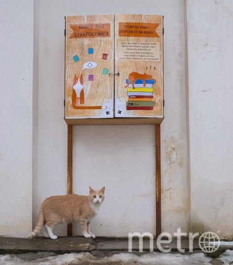 "Кот Персик из Фонтанного Дома. Фото Алена Бобрович, ""Metro"""
