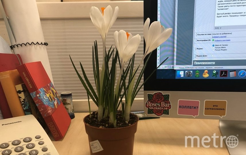 """Крокусы – идеальные цветы для офиса: цветут буйно, места занимают мало. Фото """"Metro"""""""