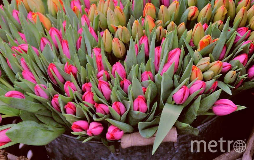 Тюльпанам подойдёт холодная водичка. Фото pixabay