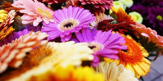 Флорист советует покупать цветы в проверенных магазинах.