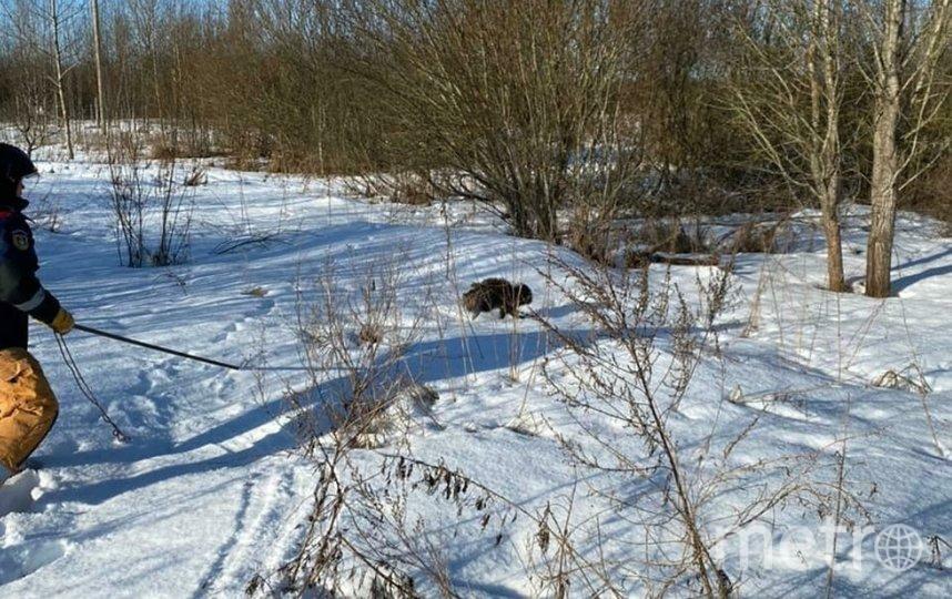 Дикий зверь забрался в очистные сооружения и не могвыбраться самостоятельно. Фото Аварийно-спасательная служба ЛО.