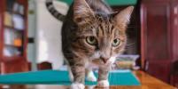 Мося и Фрося. Как приютский кот и бездомная кошка стали звездами
