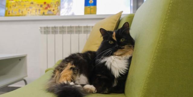 Кошка Фрося.