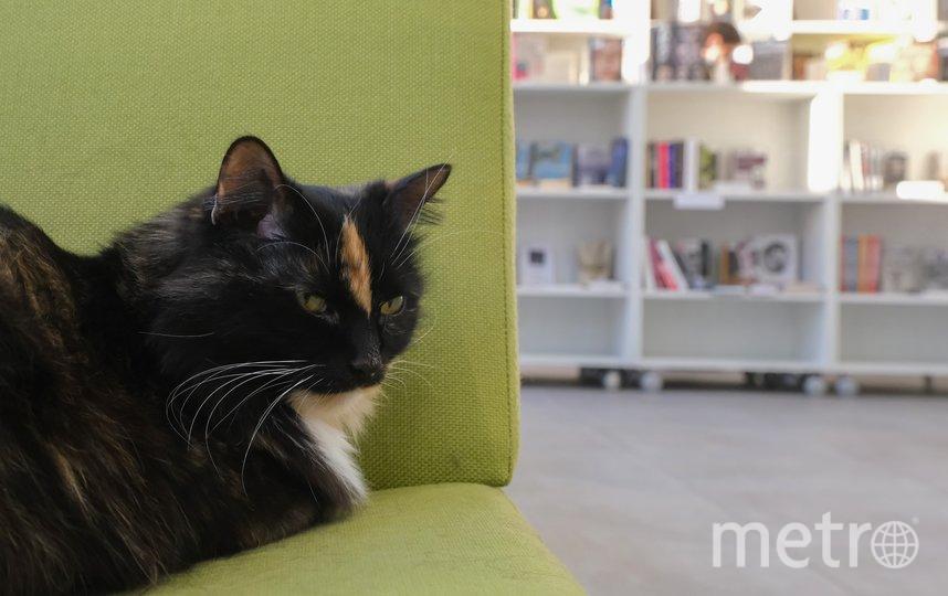 Кошка Фрося. Фото Алена Бобрович.