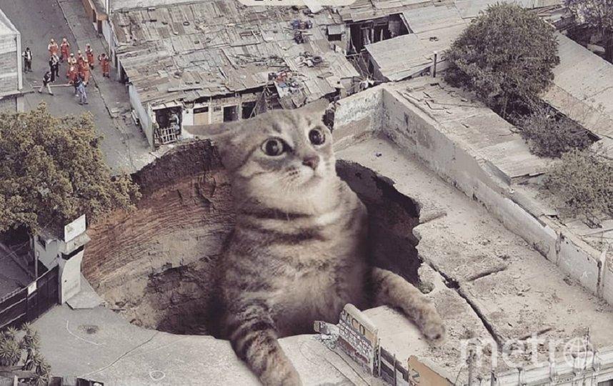 Своих котов художник называет котзилами. Фото instagram.com/fransditaa.
