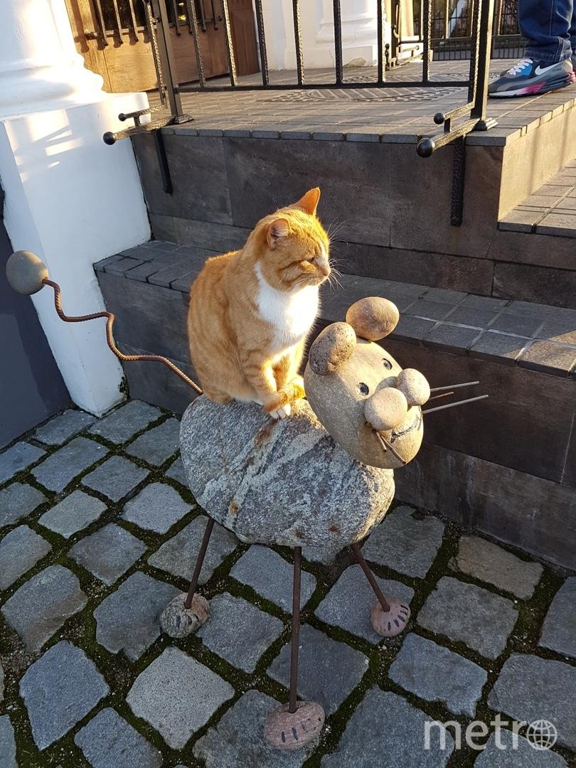 Рыжий кот Семён Семёнович из Зеленоградска Калининградской области.