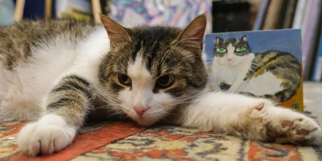 """11 лет кот Шпатель работает в галерее """"Мансарда художников""""."""
