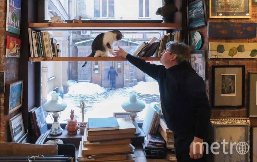 """11 лет кот Шпатель работает в галерее """"Мансарда художников"""". Фото Алена Бобрович., """"Metro"""""""