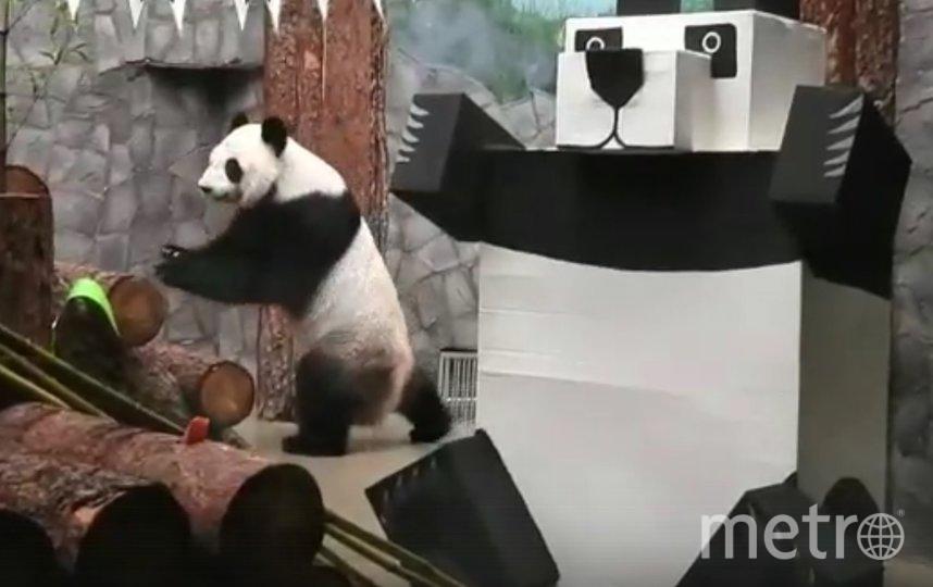 """В честь праздника для обитателей зоопарка соорудили """"робопанд"""". Фото instagram.com/moscow_zoo_official/."""