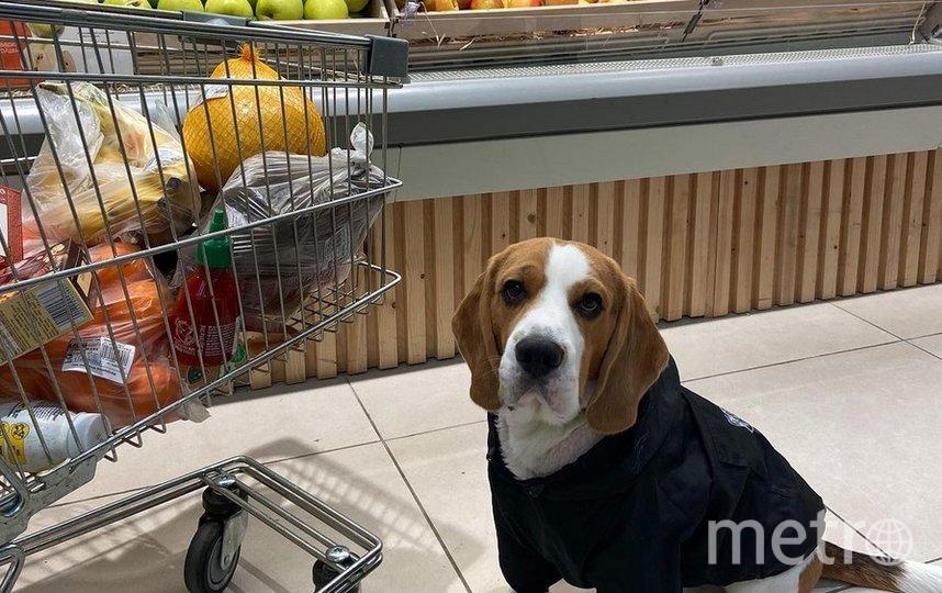 Москвичи хотят шопиться вместе с собаками. Фото instagram.com/archibeagle/.