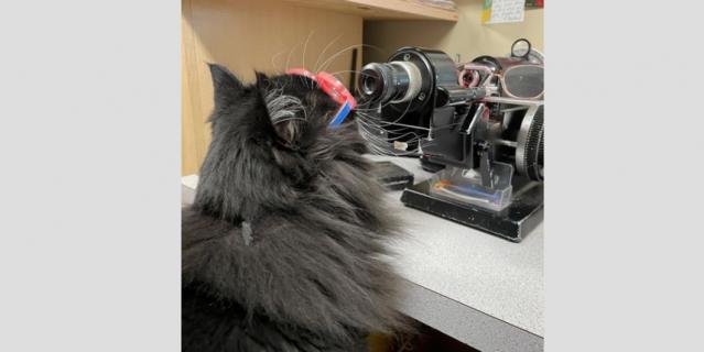 Иногда Трюфель сама проверяет оборудование в кабинете.