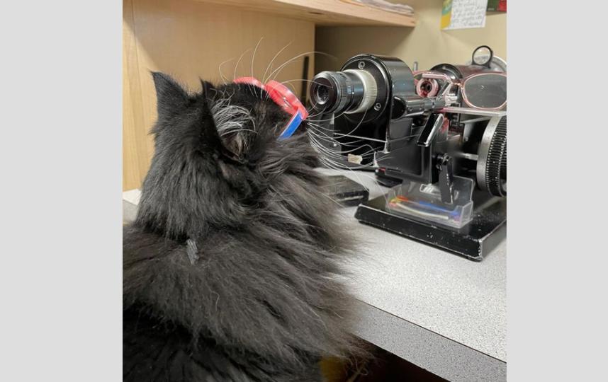 Иногда Трюфель сама проверяет оборудование в кабинете. Фото Скриншот Instagram: @truffles_the_kitty