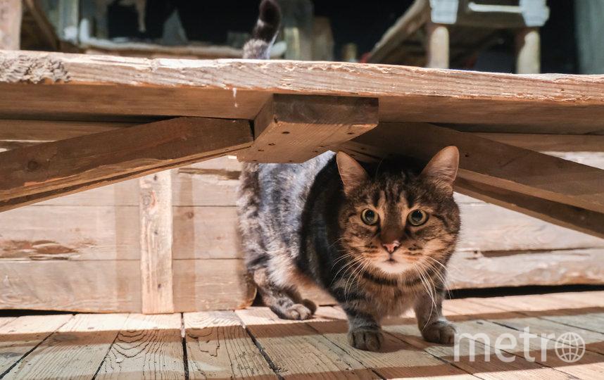 """Коты выходят на сцену и срывают овации. Фото Алена Бобрович., """"Metro"""""""