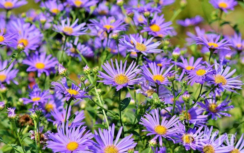 Советы по посадке цветов. Фото pixabay.com