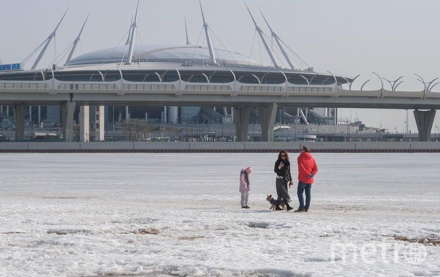 """Петербуржцы вышли на лед с детьми и животными. Фото Алена Бобрович, """"Metro"""""""