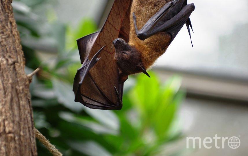 ВОЗ описала путь коронавируса от летучих мышей к людям. Фото pixabay.com