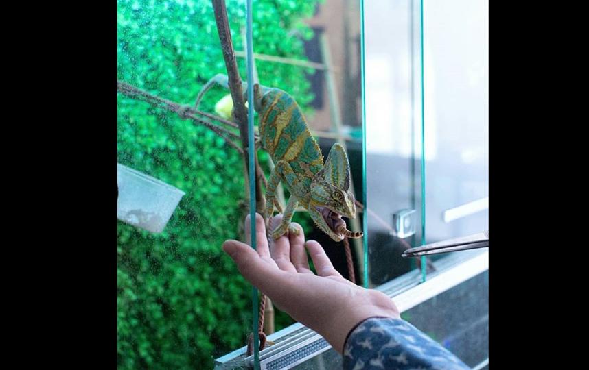Алина мечтает открыть собственную ветклинику. Фото из личного архива