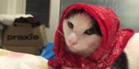 Любители кошек постят снимки питомцев в стиле