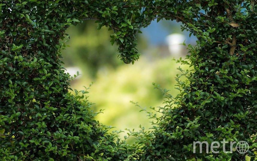 """Лекция """"Модели любовного поведения. В отсутствии любви: вторая половина XIX века"""". Фото pixabay"""