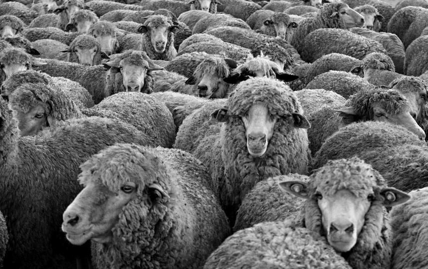 Из-за пробки на Суэцком канале многих животных ждет гибель. Фото Pixabay.