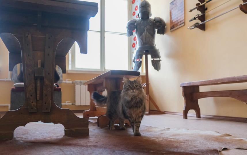 """Кошке нравится слушать лютню. Фото Алена Бобрович, """"Metro"""""""